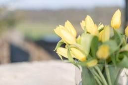 Garten Blumen Tulpen