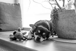 Hund bei Fotoshooting Zuhause