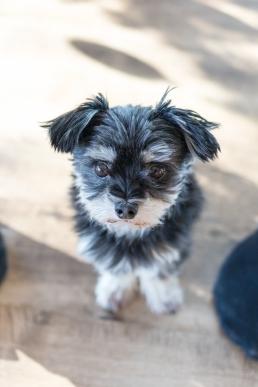 Homestory mit Hund im eigenen Zuhause