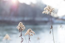 Fotoshooting in der Natur